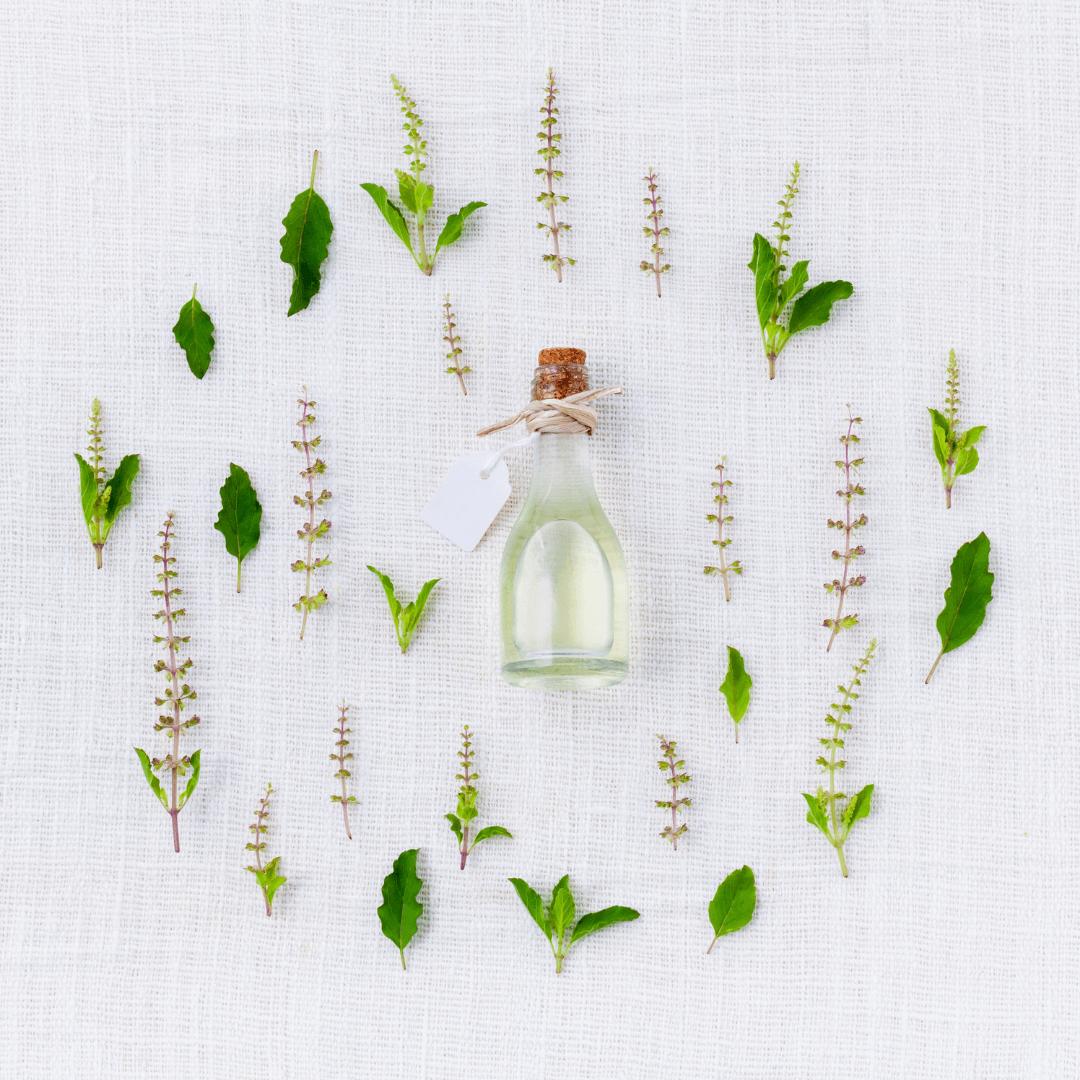 oleo de melaleuca 2 - Óleo de melaleuca - benefícios e formas de uso para estética e saúde