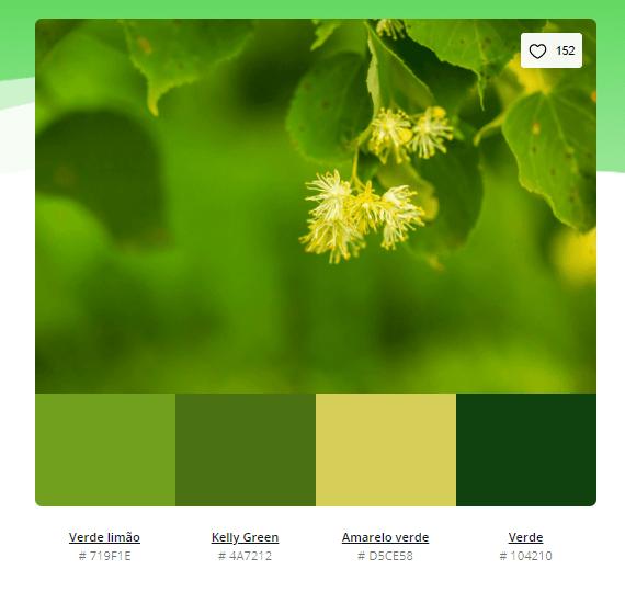 paleta de cores verde escuro - Modelos de paleta de cores verde - 10 combinações inspiradoras